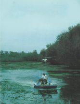 1980spring
