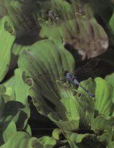 1991spring
